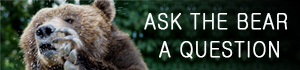 ask the bear a question